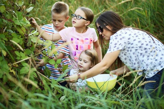 blackberry-picking-with-kids