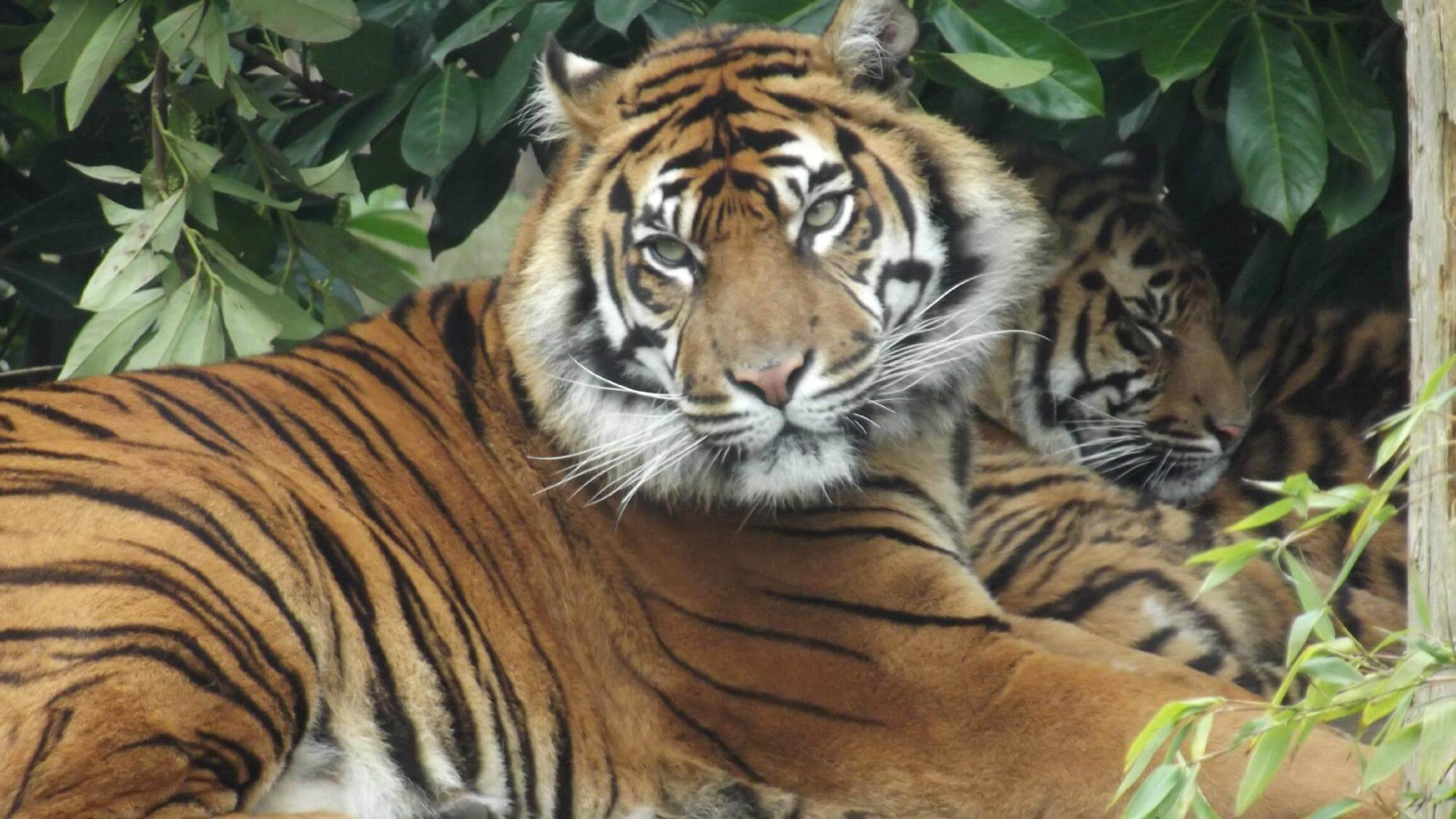 Chester Zoo And Hotel Deals