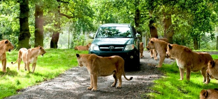 Liverpool Family Break At Holiday Inn Express With Knowsley Safari Park Child Vouchers From