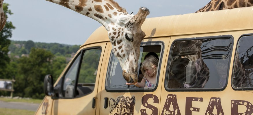 West Midlands Safari Park Hotel Deals