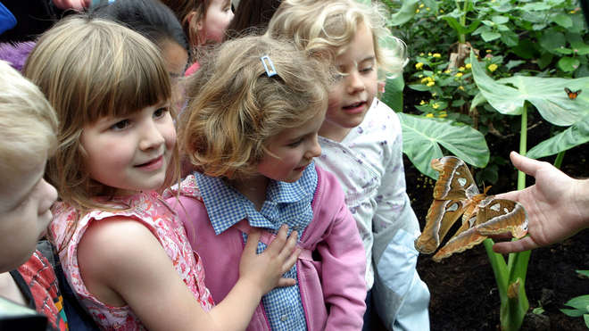 Children enjoy Butterfly Paradise at ZSL London Zoo