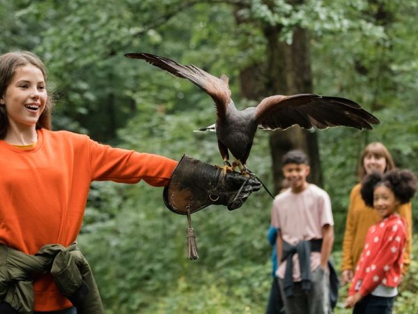 £15 -- 2-hour birds of prey experience nr Burton upon Trent