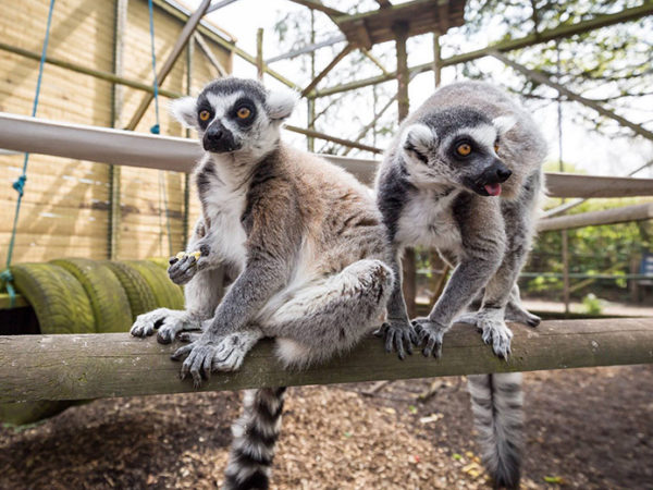 £24 instead of £40 for a family ticket for two adults and up to three children to Hoo Farm Animal Kingdom, Telford - save 40%