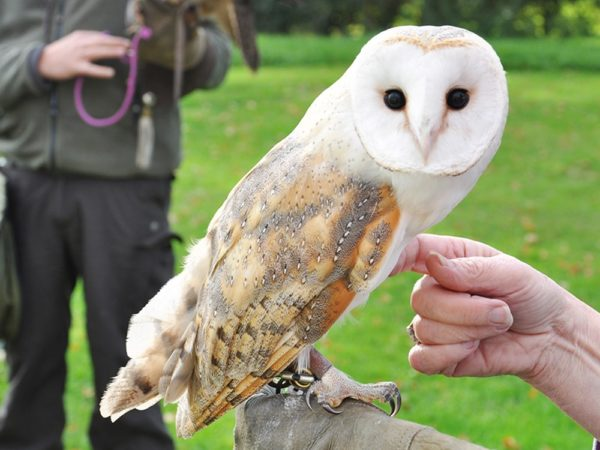 £25 -- Shrewsbury: 2-hour birds of prey experience, 68% off