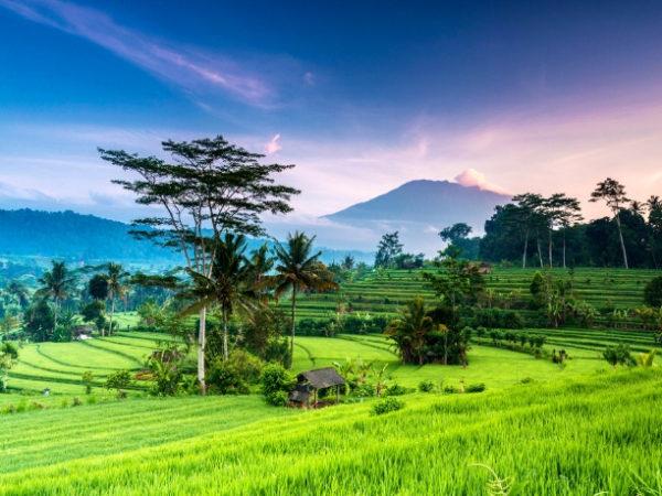 Experience authentic Bali, Ubud, Menjangan, Candidasa and Sanur, Bali, Indonesia