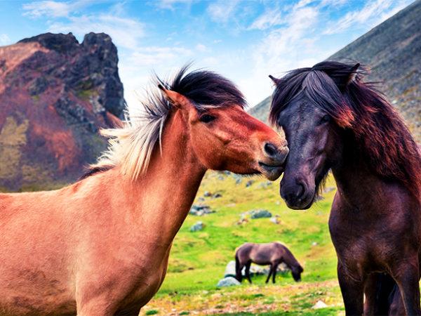 Eco-luxury Iceland summer or winter getaway with Blue Lagoon, horseback riding option & more, Eyja Guldsmeden Hotel, Reykjavik - save 40%
