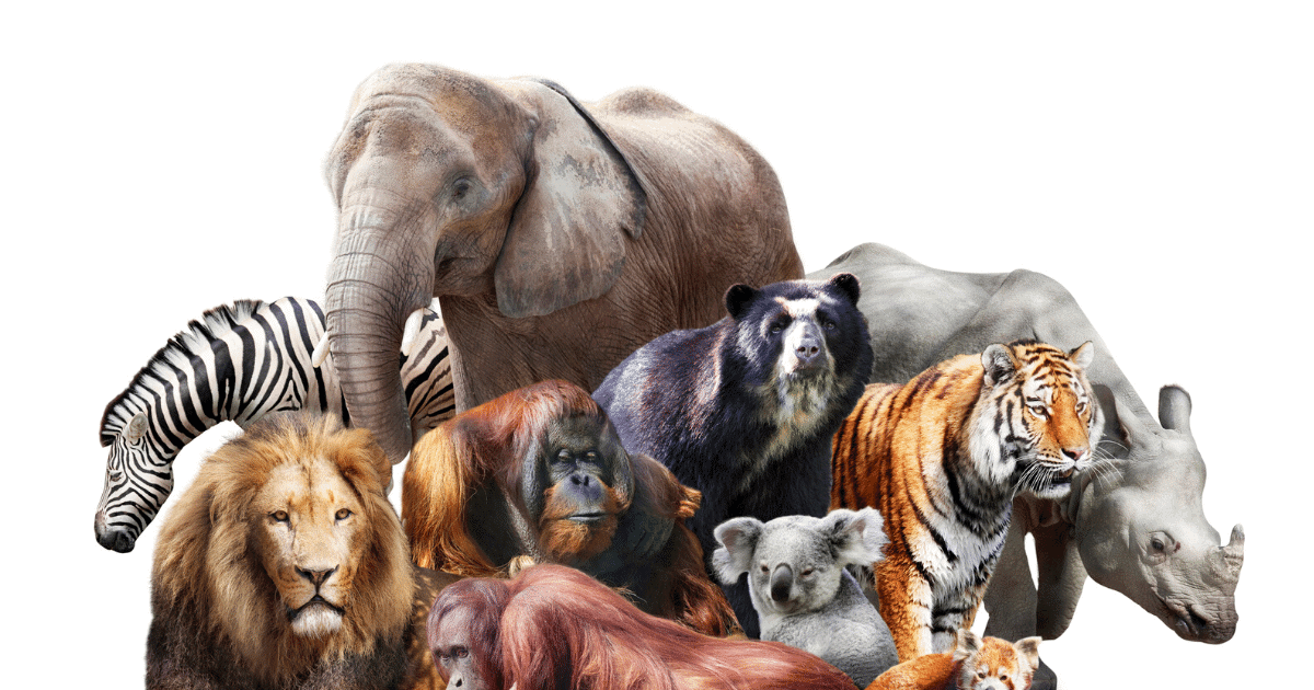 virtual zoo-28 of the Best Virtual Zoos and Live Cams in the World