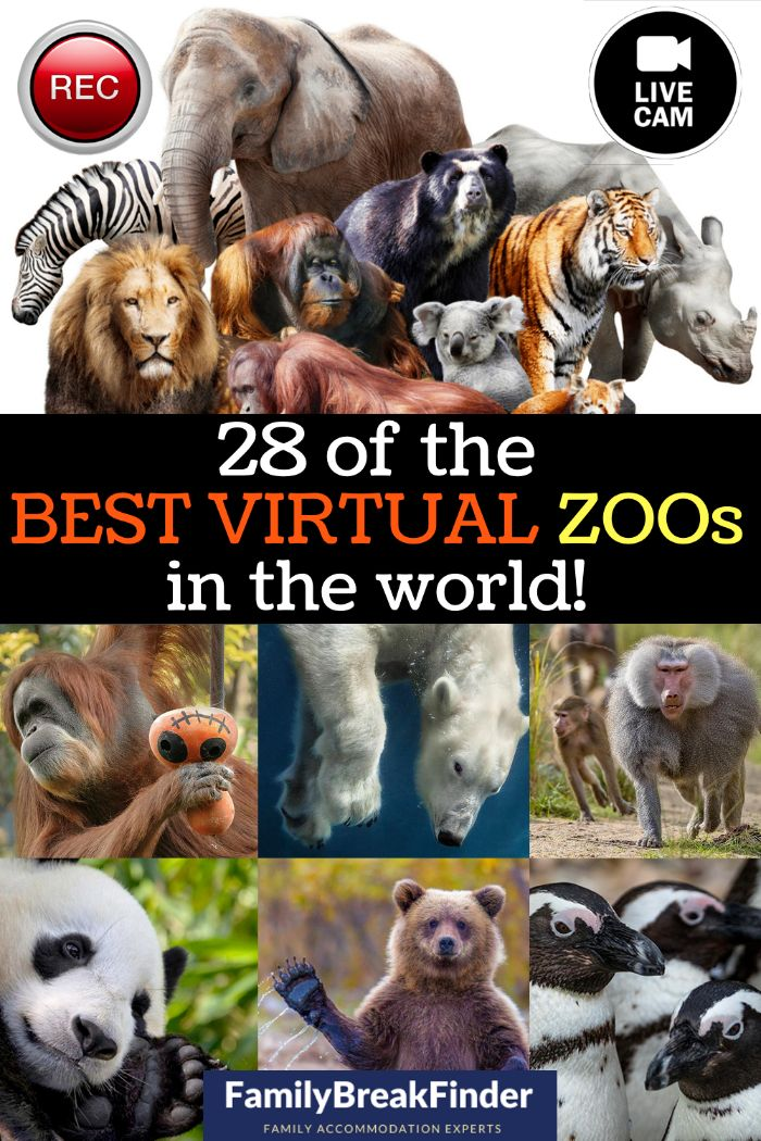 29 of the Best Virtual Zoos and Live Cams in the World
