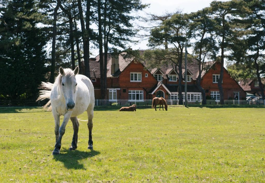 Horses & ponies can be found right outside kid-friendly Beaulieu Hotel