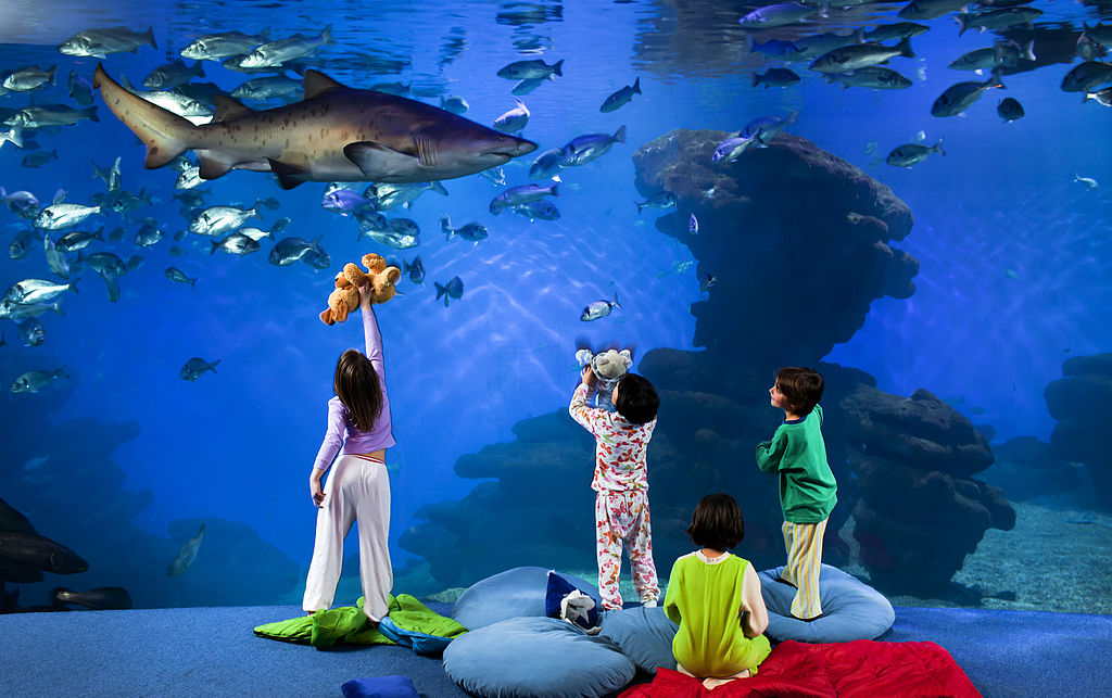 children playing at palma aquarium