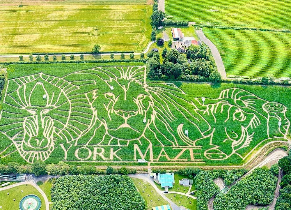 Jungle animals maze at York Maze