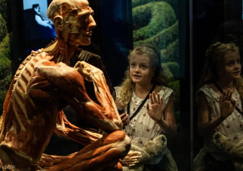 child marvelling at a human body at body worlds london