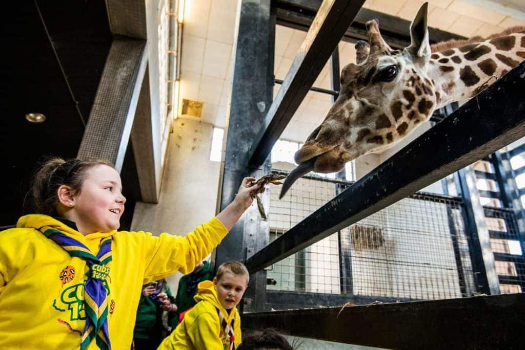 kids feeding a giraffe at zsl london zoo