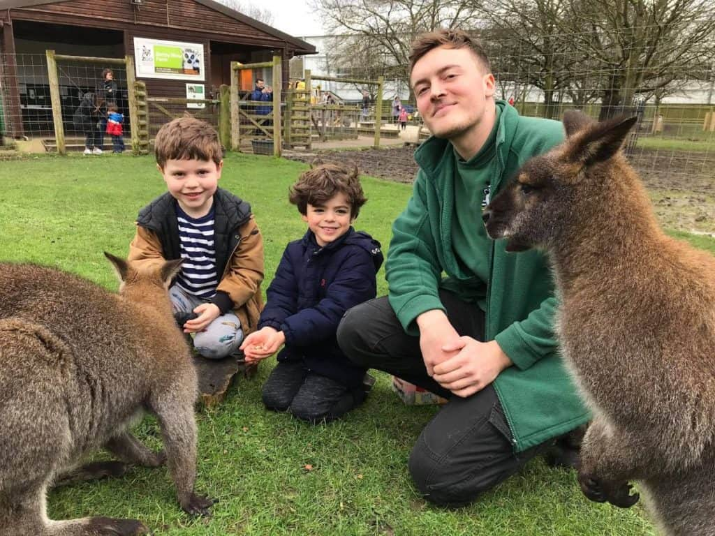 kids feeding kangaroos and other animals at battersea park children's zoo