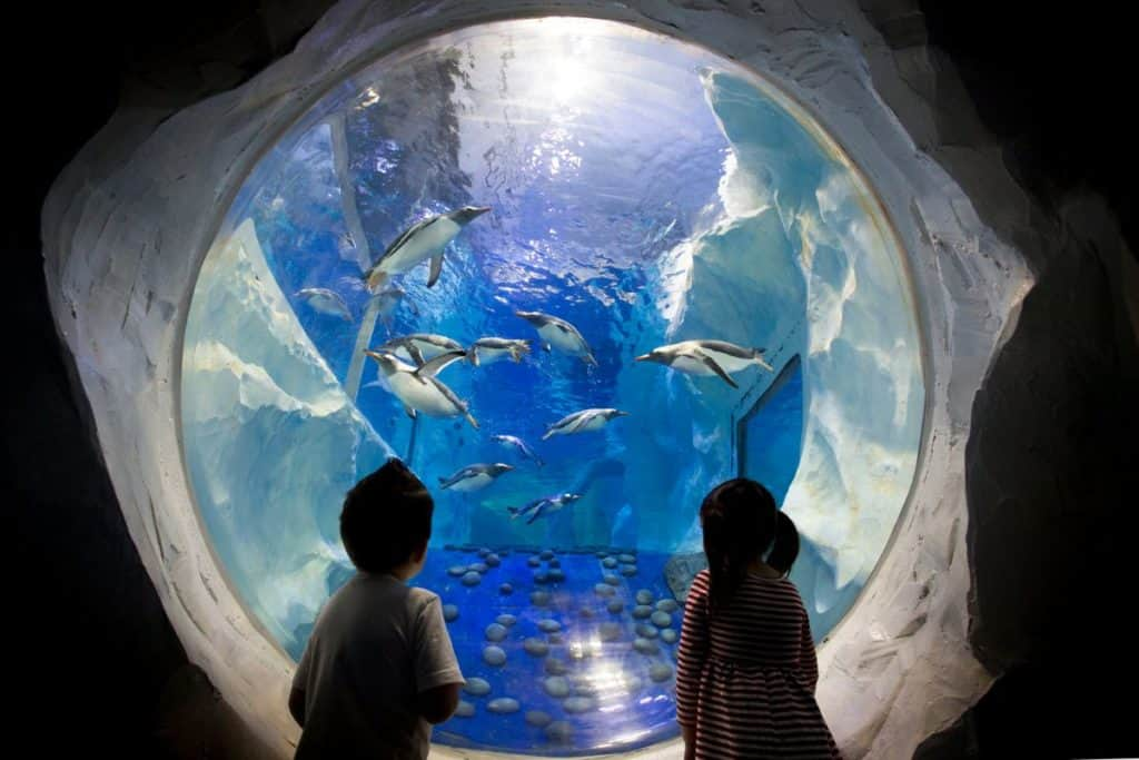 kids looking at penguins inside a viewing room at sea life london aquarium